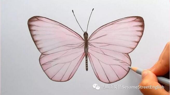 看看蝴蝶如何出生